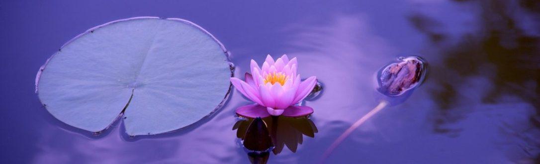 cropped-lotus-1205631_1280.jpg